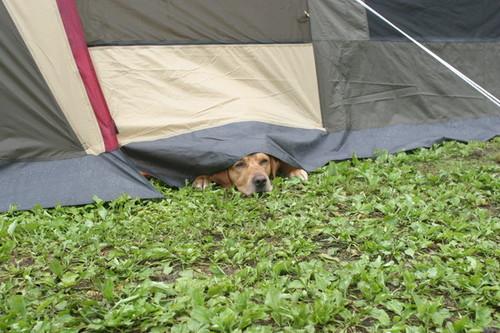 初めてのオートキャンプ