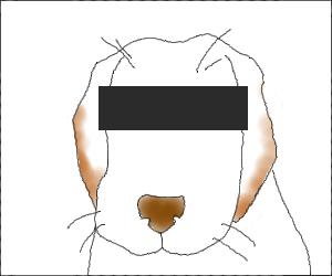Rug01