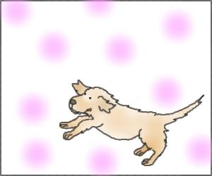 Puppy00