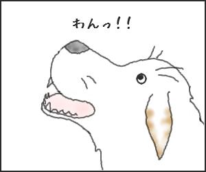 Shiba01