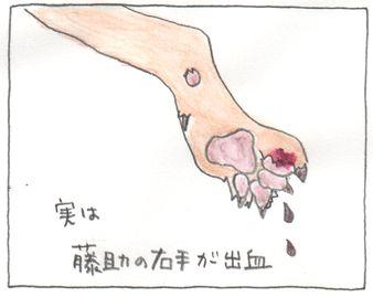 Himetugi21