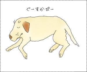 Yume11