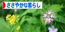Sasayaka_bun01