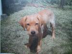 Puppy2_3